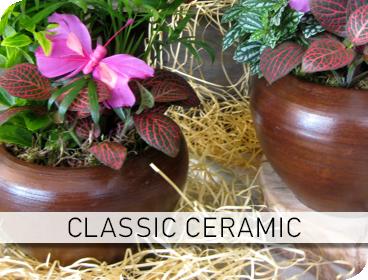 Φυτοσυνθέσεις Classic Ceramic