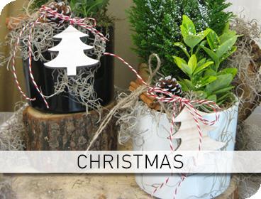 Φυτοσυνθέσεις Christmas
