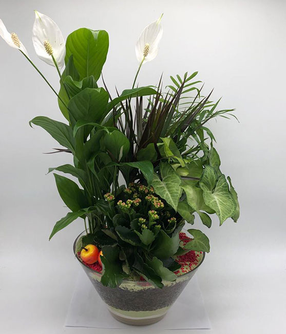 Γυάλα μπολ με σύνθεση φυτών