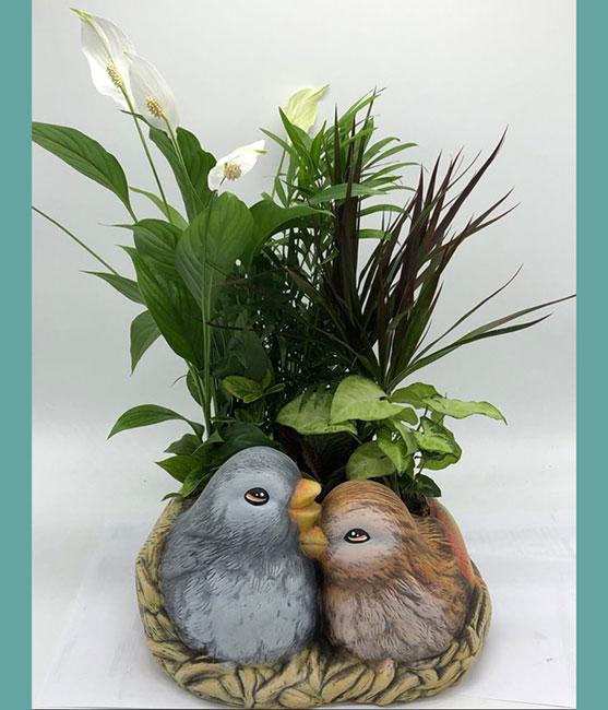 Φωλιά με πουλάκια