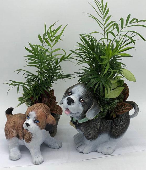 Σκυλάκι Γ/ Σκυλάκι Αγίου Βερνάρδου